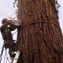 sequoia-fell-160
