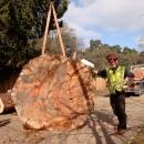 sequoia-fell-199